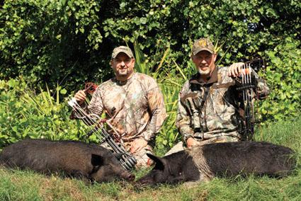 florida hog hunting