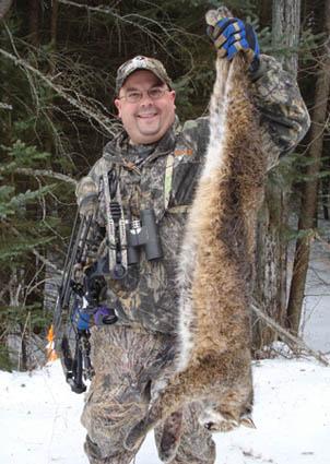 michigan bow hunting bobcat