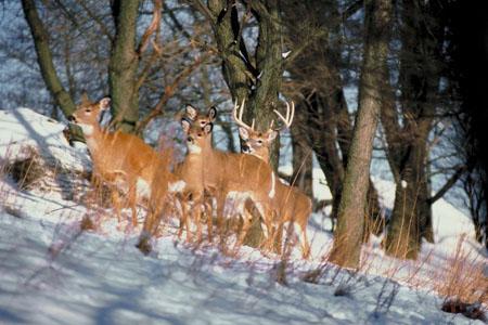 deer hunting late season