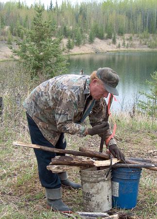 create bear bait site