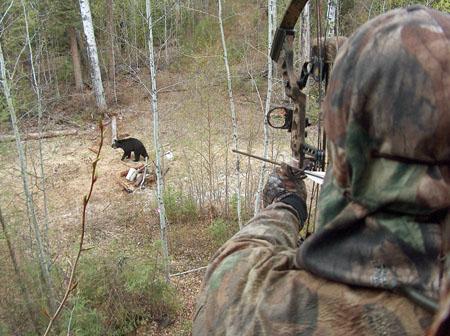 bear hunting bait site