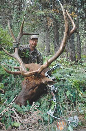 elk hunting trophy bull