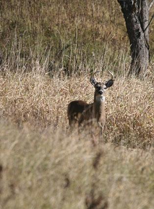 quality deer management