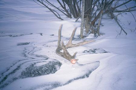 Scouting Deer Sheds
