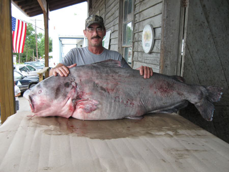 world record blue catfish