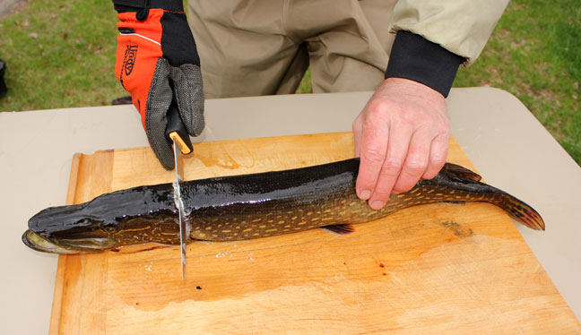 How to clean pike