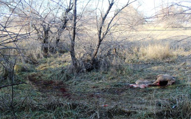 Trophy deer poached within twin falls city limits 2015 for Idaho fish and game hunter report