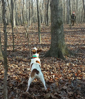 feist hunting squirrels