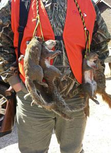 squirrel hunter squirrel master classic