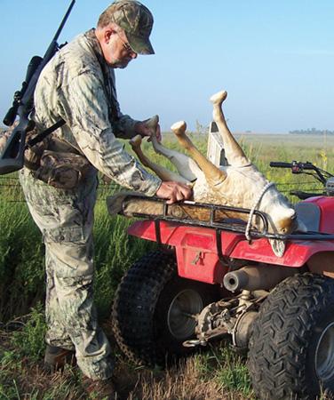 coyote hunting tactics