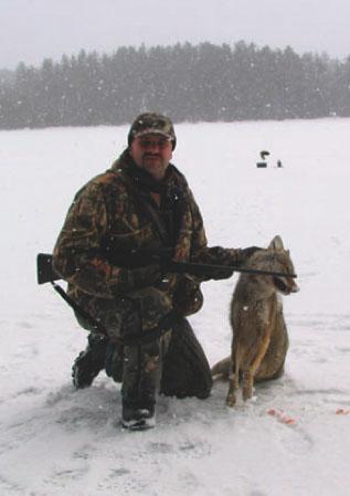 deep snow coyote