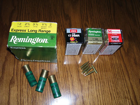 raccoon hunting ammo