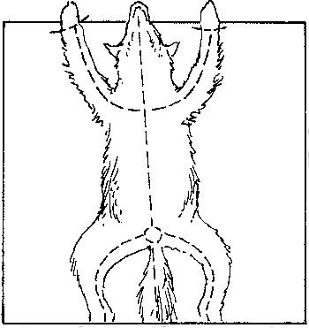 skinning animal