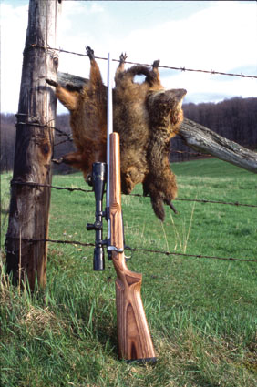 22 caliber hunting