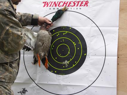 duck shotgun pattern