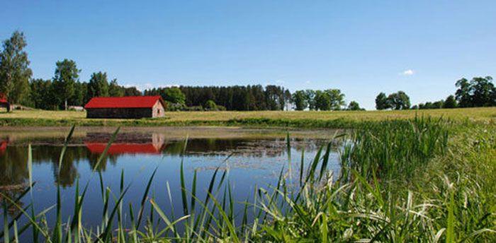Proper pond management benefits fish and anglers for Garden pond management