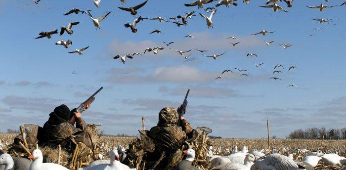 Spring Snow Goose Hunting Hunting Fishing And Shooting
