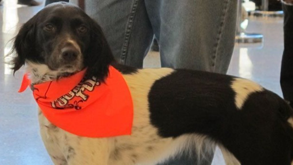 Bird Dog Parade at Pheasants Forever's Pheasant Fest-3