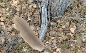 The Life Of A Bowhunter In Deer Season: Day 3