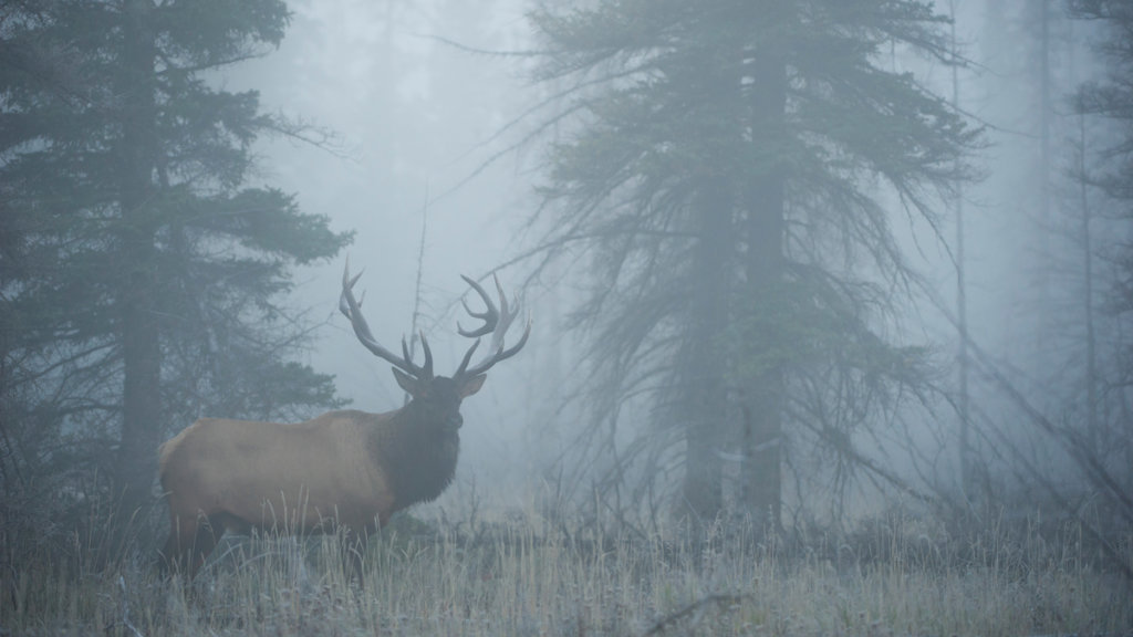 Elk Hunters: Forget That 10 Percent Success Rate