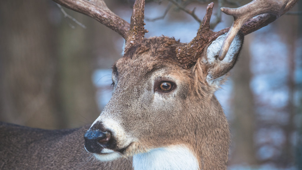 A Deer's Vision: It's the Stuff of Superheroes