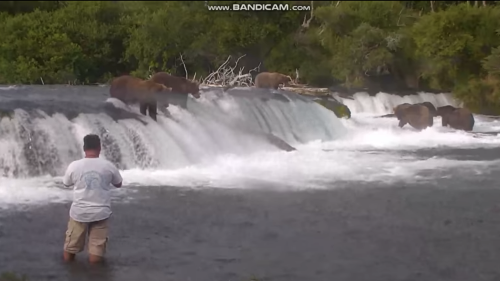 Incredibly Stupid Man Wades Into River With Brown Bears and Survives