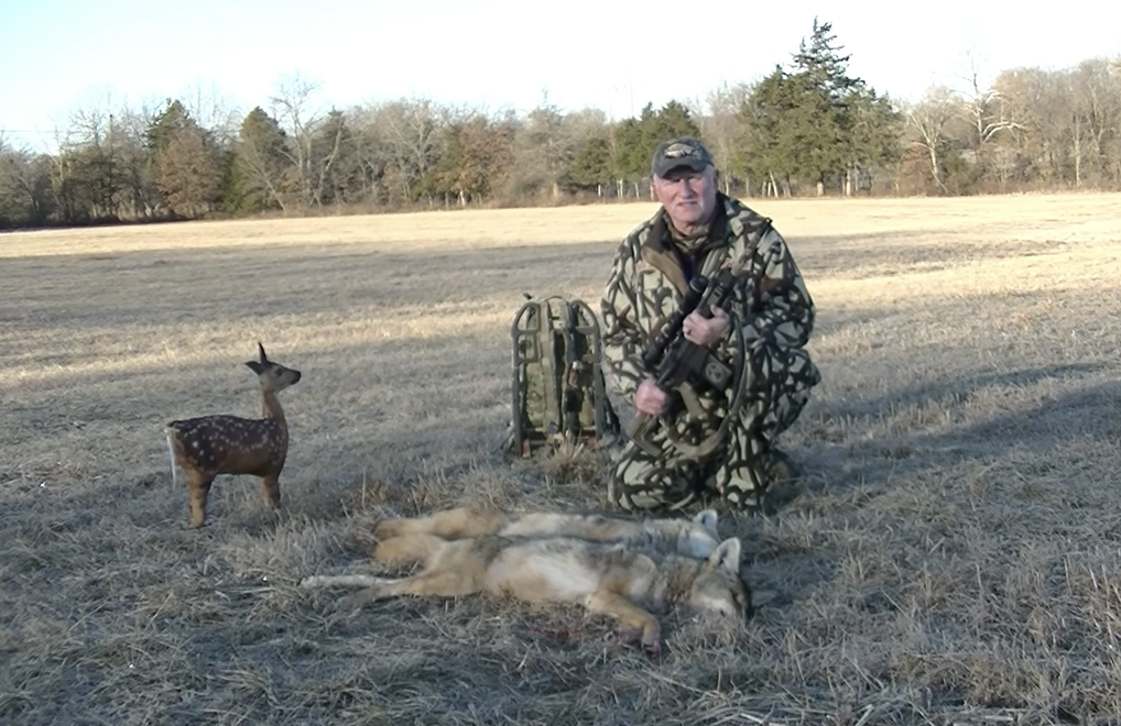 Coyote hunt decoy double caught on video