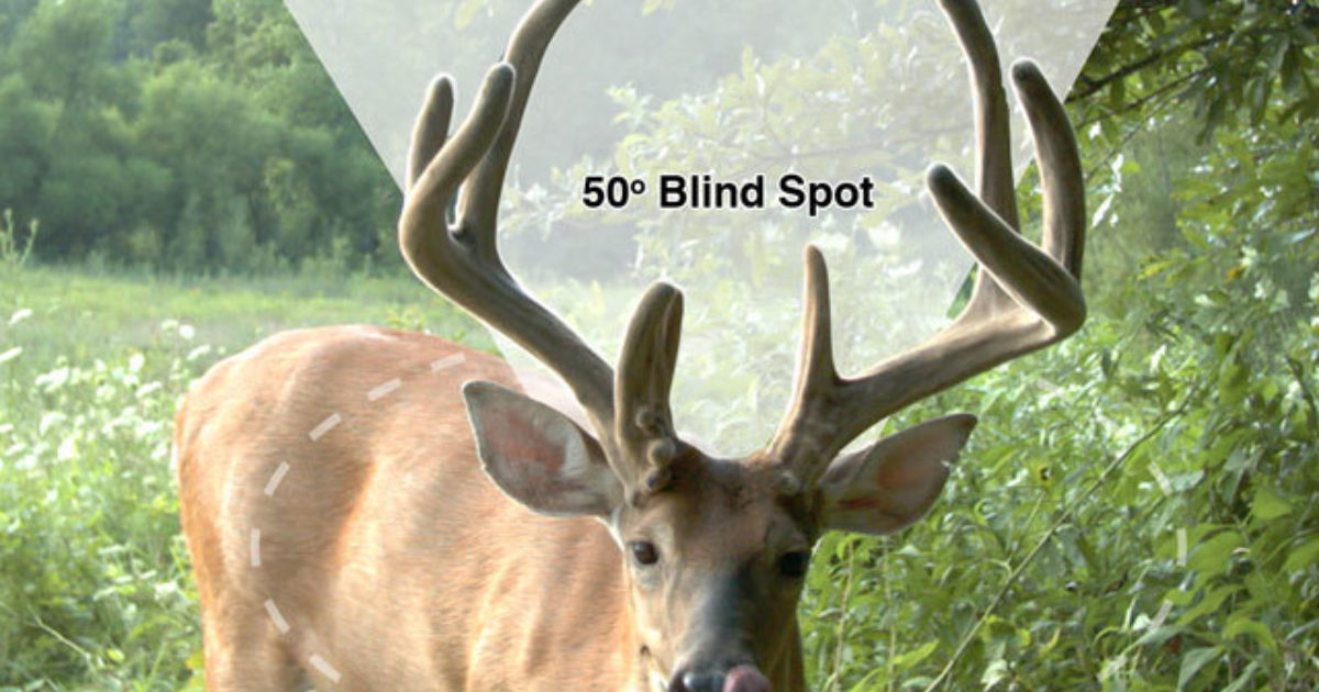 Scientific Facts About How Deer See And Hear Grand View
