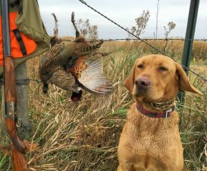 Courtesy Facebook - Pheasants Forever