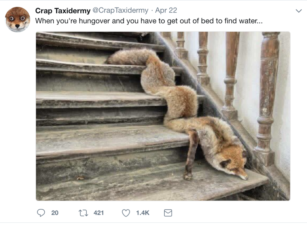 Weird Taxidermy On Twitter Instagram Grand View Outdoors