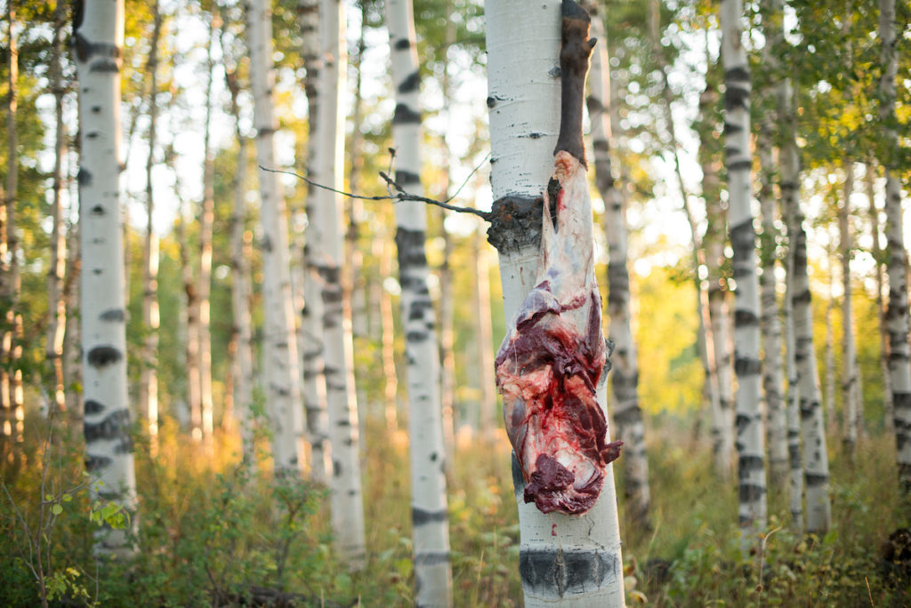 Benefits of Eating Wild Game