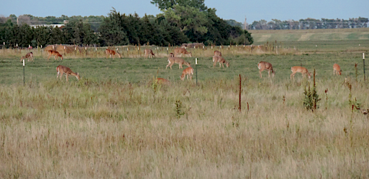 Hunt Deer in the Great Plains